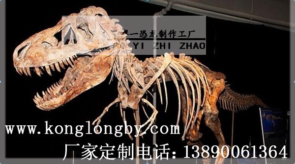 专业恐龙骨架化石生产厂家——自贡博一恐龙工厂欢迎您!