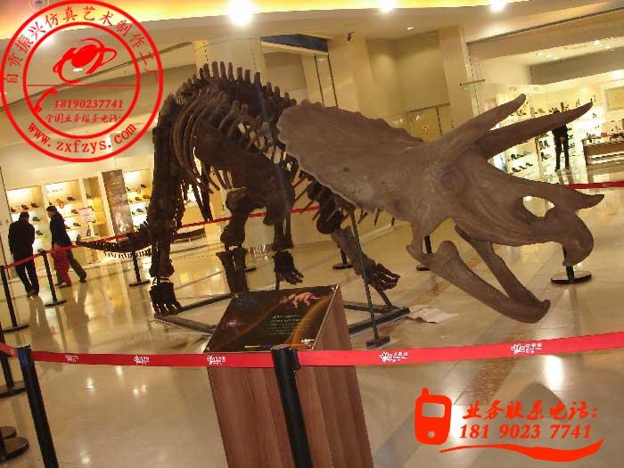 仿真恐龙化石制作工艺为全手工制作,其主要原材料为树脂,经多重工序制作而来;也正是因为全手工制作,所以具备一定生产周期、产品种类、尺寸、造型、颜色可个性化订做的特点。产品适用于博物馆、侏罗纪公园、恐龙主题公园、恐龙展、游乐园、房地产开盘和商场等商业庆典活动。 恐龙化石骨架三角龙:    您好,自贡恐龙工厂欢迎您的光临!