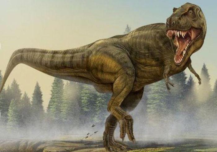 你对恐龙了解吗?你知道恐龙的视力如何吗?今天恐龙制作工厂带你一起了解《恐龙的视力如何?》。 判断动物的视力好不好,大体有两个标准:一个是眼睛大小,眼睛大视力好,眼睛小视力差;二个是两眼的位置,植食性动物的眼睛长在头部两侧,双眼距离很大,这类动物的视野很广阔水平环视可及时发现前面、侧面甚至身后面的敌人。  肉食性动物的双眼距离较近,且长在头部的前面,视野有一部分重叠,看物体立体感强,判断目标的距离准确迅速,利于捕食猎物。  根据此原理,多数人认为:鸭嘴龙有一双很大的眼睛,眼睛周围有一圈能活动的骨质的巩膜板